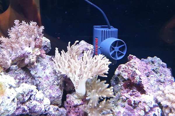Szűrők és korallok.