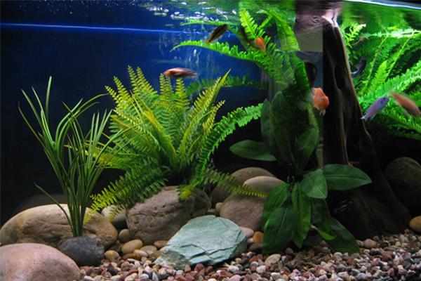 édesvízi-akvárium