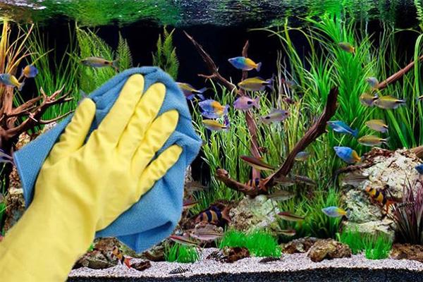 akvárium-tisztítása