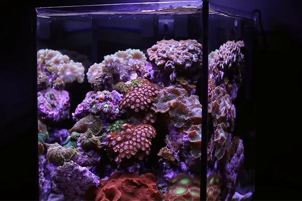nano-tengeri-akvárium