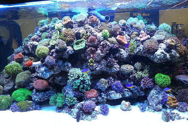 tengeri-akvárium